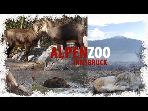 Alpenzoo Innsbruck | Tirol | Austria | Follow Me Everywhere