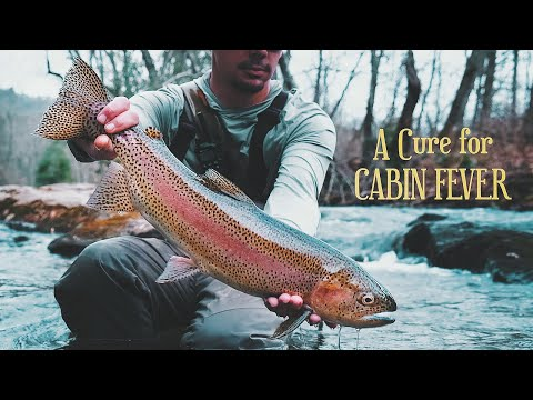 A Cure For Cabin Fever - FLY FISHING BLUE RIDGE, GA