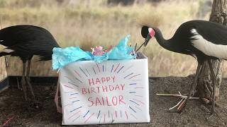Happy Birthday Sailor from Jasmine and Tiana!