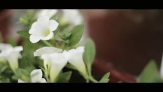 Промо клип со свадьбы