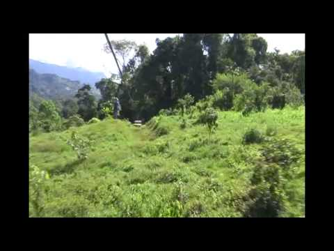 Zip Line Canopy Tour Video: Dream Forest Canopy Tours (English)