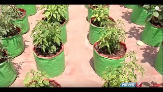 How organic terrace gardening can keep you away from doctors? | Poovali | News7 Tamil