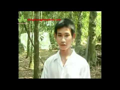 Chàng sinh viên ở Tiên Phước nuôi gà rừng