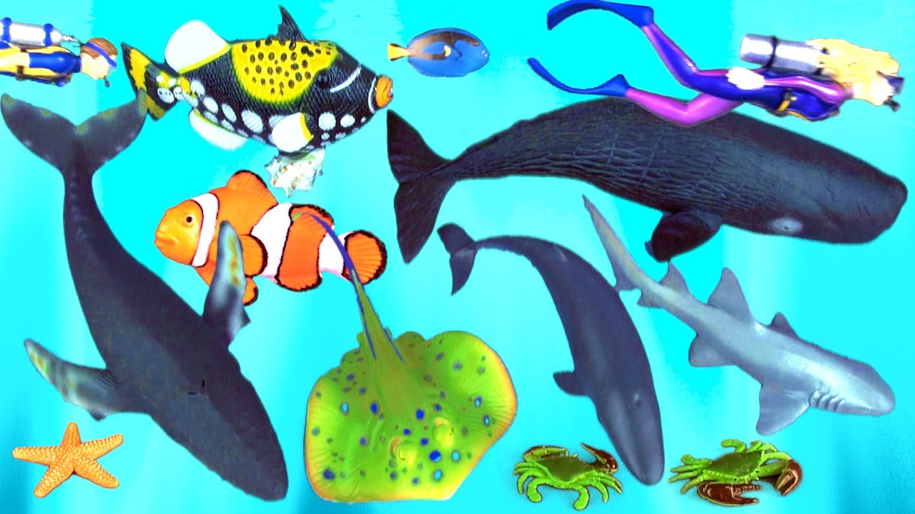 shark collection toys humpback whale fish stingray triggerfish