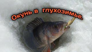 Ловля окуня на блесну в глухозимье на Рыбинском водохранилище Рыбалка со льда 2021