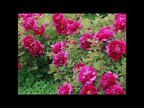 Best Islamic song hamd Idrak se pre hi ya Rab maqam tera ادراک سے پرے ہے یارب مقام تیرا
