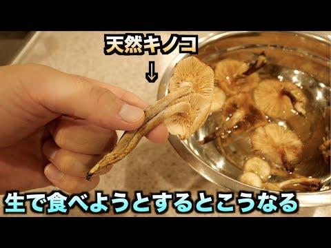 キノコを生で絶対食べてはいけない理由がわかる動画