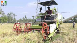 Paddy Rice Cutter | Paddy Cutting Machine | Paddy Rice Cutter Machine