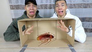 WAS IST IN DER BOX CHALLENGE EXTREM 2 !!! (LEBENDE TIERE) | PrankBrosTV