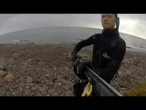 Spearfishing in Denmark - Weekend at Langeland - 2016 - Uvjagt