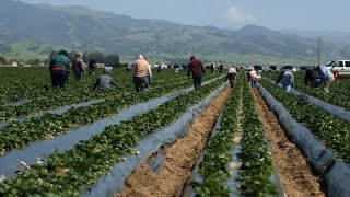 Farmers, workers fearful of Trump immigration crackdown
