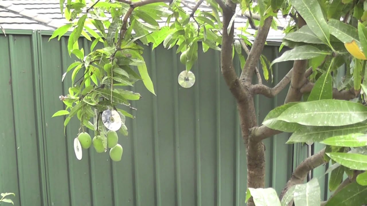 Protect your fruit trees from birds and possum using th ...