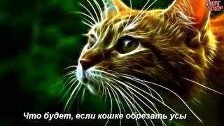 Что будет, если кошке обрезать усы