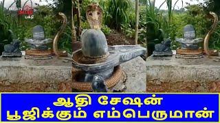 எம்பெருமானுக்கு குடையாக காட்சியளிக்கும் ஆதிசேஷன் | Lord Siva Peruman | Britain Tamil Bhakthi