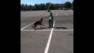 Nashville Dog Training With Sammy The German Shepherd