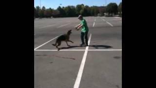 Nashville Dog Training With Sammy The German Shepherd