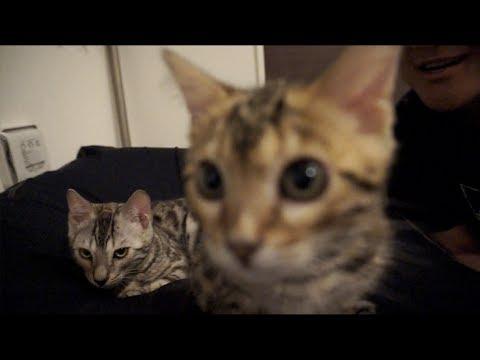 自分たちの声に反応する子猫たち