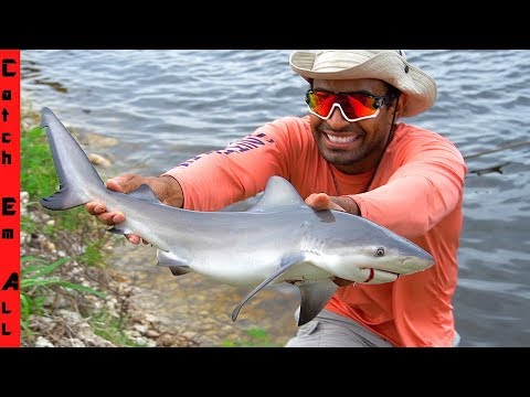 BULL SHARK Caught In FRESHWATER CANAL!