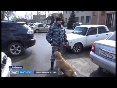 ГТРК Белгород - Крупную партию контрафактных сигарет задержали в Шебекинском районе