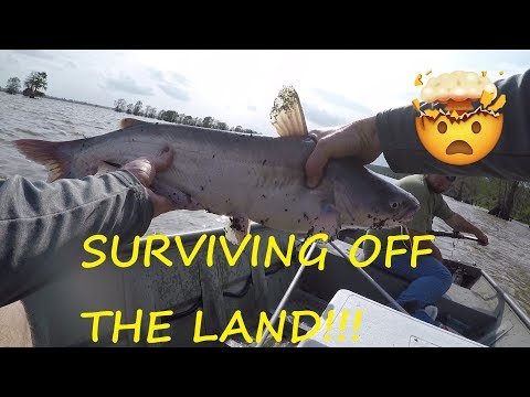 Surviving On Catfish Caught On Limb Lines - Catching Channel And Blue Catfish