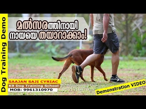 Dog Training Demo: Stand, Sit and Down Under March / Saajan Saji Cyriac K9 Dog Training School