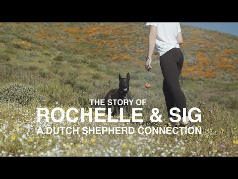 DUTCH SHEPHERD CONNECTION: ROCHELLE & SIG