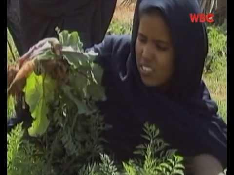 Oasis farmers in Mauritania - Bahasa Malaysia narration