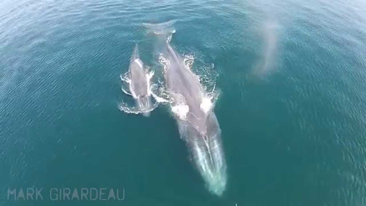 How Whale Baby Would Big Blue Be