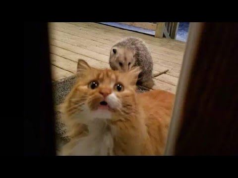 WARNING! You may lose your teeth because of laugh - FUNNY Cat compilation
