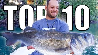 BIGGEST SEABASS IN GREECE - MY TOP 10