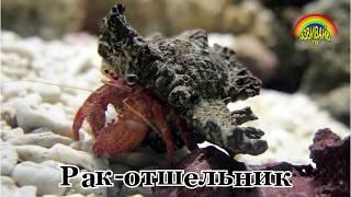 Развивающие видео для детей. Морские животные. Слушаем звуки.