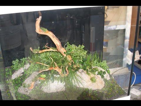 AquaVideoMag 36 - aquarium 2 part4 aquascaping seminar