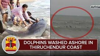 Dolphins Washed Ashore in Thiruchendur Coast - Thanthi TV