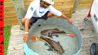 GIANT CATFISH POOL POND **MOVING TIME!**