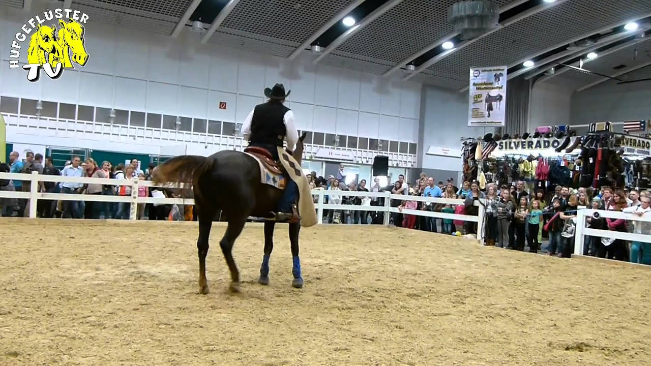 Pferde Dortmund