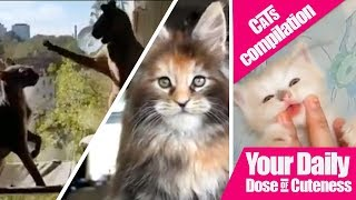 The Ultimate Cats and Kitten Compilation | Cute Is Not Enough | Cute And Funny Cats 2018