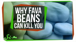 Why Fava Beans Can Kill You