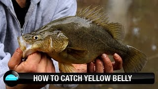 How To Catch Yellow Belly