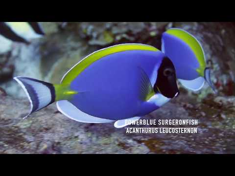 500 + Fish Identification Documentary By Pano4life