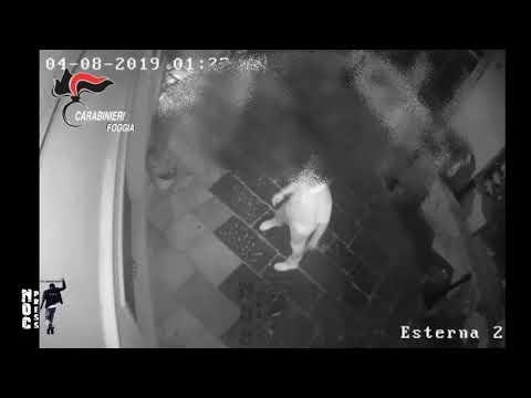 Sangue e violenza [VIDEO] nel centro storico di Lucera. I Carabinieri arrestano giovani locali