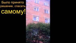 Спасение кошки иркутск