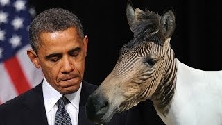Obama Called a Zonkey by Republican