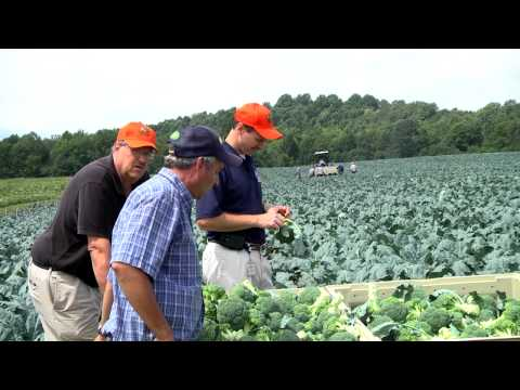 Food City Local Growers Series - Light's Farm