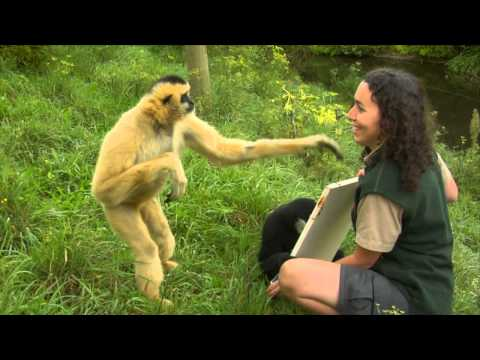 Conservation Connection: White Cheeked Gibbon