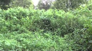 Historic Fugar Orchard Restoration Project