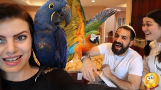 my-parrots-first-reaction-to-another-macaw
