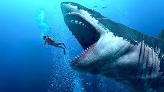 समुद्र में मिलीं दुनिया की सबसे विशाल मछली - LARGEST Shark In The World - Megalodon Hindi