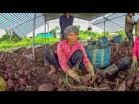 Du lịch khám phá huyện Bình Tân    Binh Tan District Discovery    Vietnam Discovery Travel
