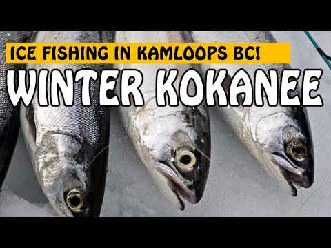 SO MANY KOKANEE! ICE FISHING FOR KOKANEE IN KAMLOOPS BC   Fishing With Rod