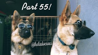 Hood Animal Voiceovers Part 55!